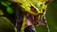 [Venomancer]
